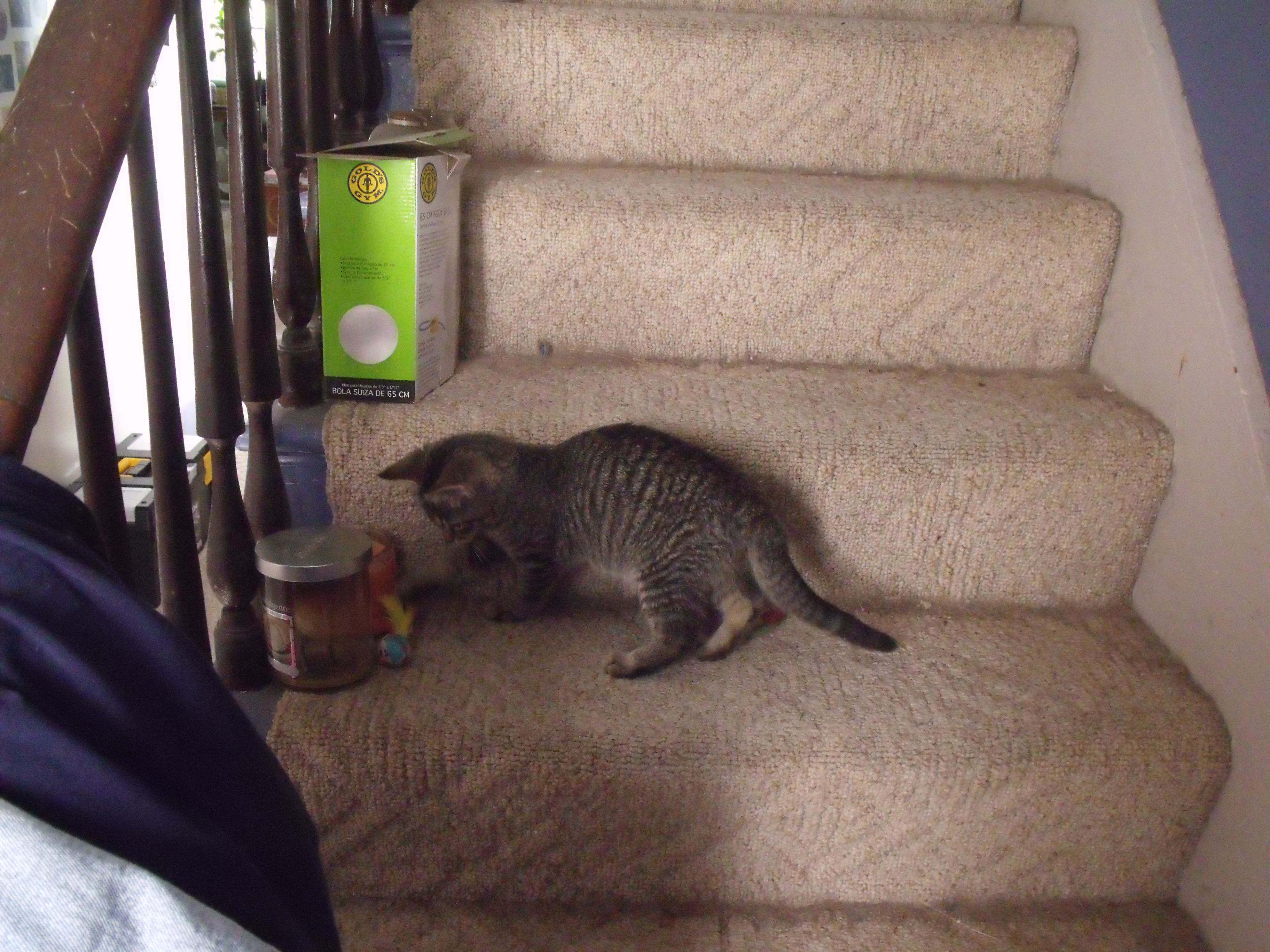 New Kitten Bryson Playing On The Stairs Animal Rescue Animals Cuteness Overload