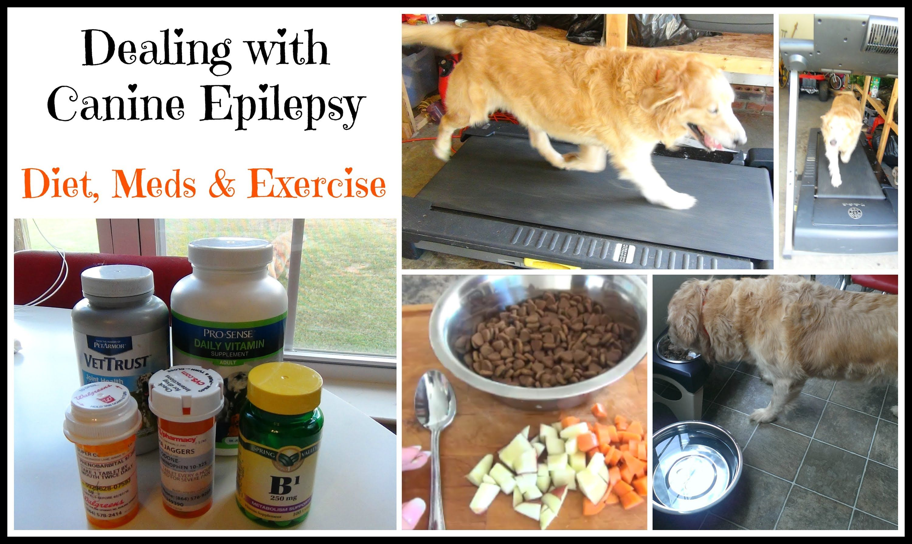 Coping With Canine Epilepsy Diet Meds Exercise Epilepsy Diet Dog Diet Epilepsy