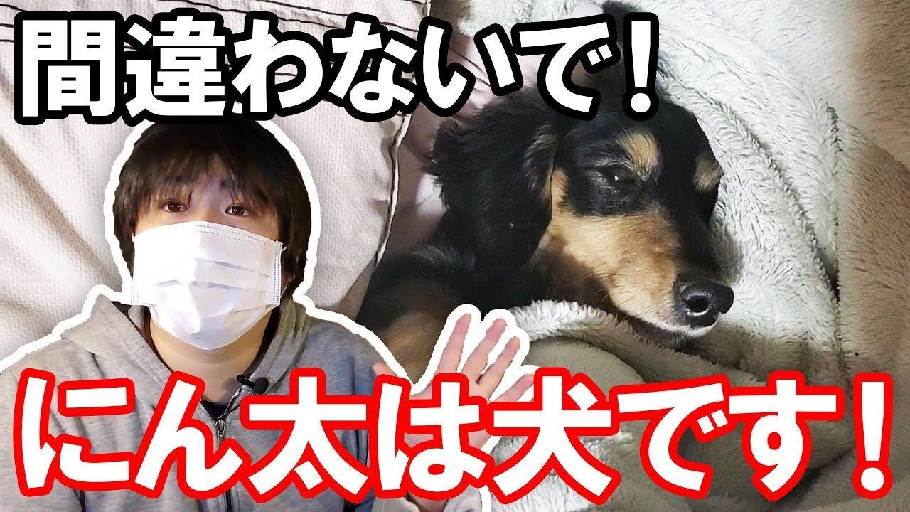 保護犬を誹謗中傷されたのでチャンネル名を変更します 誹謗中傷 にんにん チャンネル