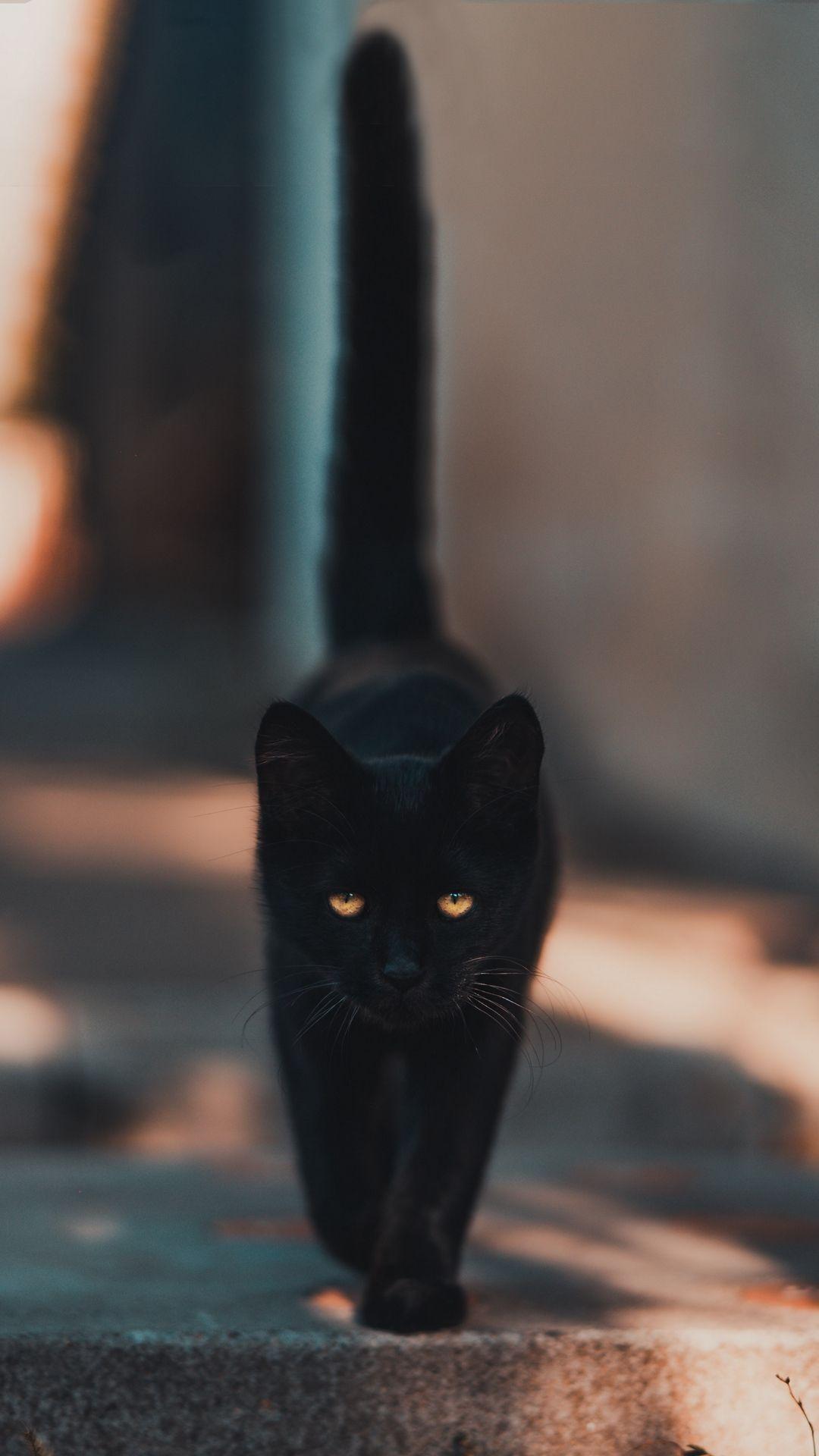 Обои котёнок, прогулка, пушистый. Кошки foto 12