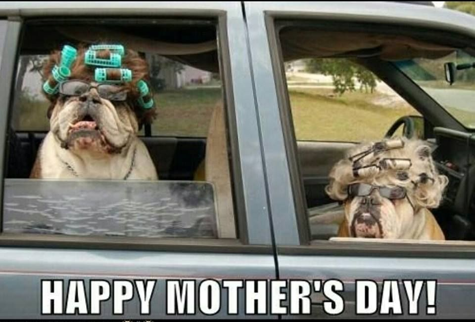 Happy Mother S Day Bully Moms Posted On Bulldog Pics