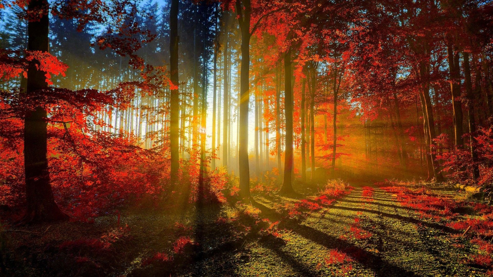 Hd wallpaper of nature - Beautiful Nature Wallpaper