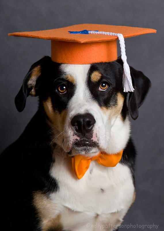 Dog Trainers Set Of 3 Graduation Caps Cute Animals Dogs