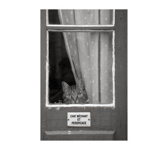 Photo of Cute Cat Photo, Peeking Kitty, Children's Room, Black and White, Animal Photography, Humorous Sign