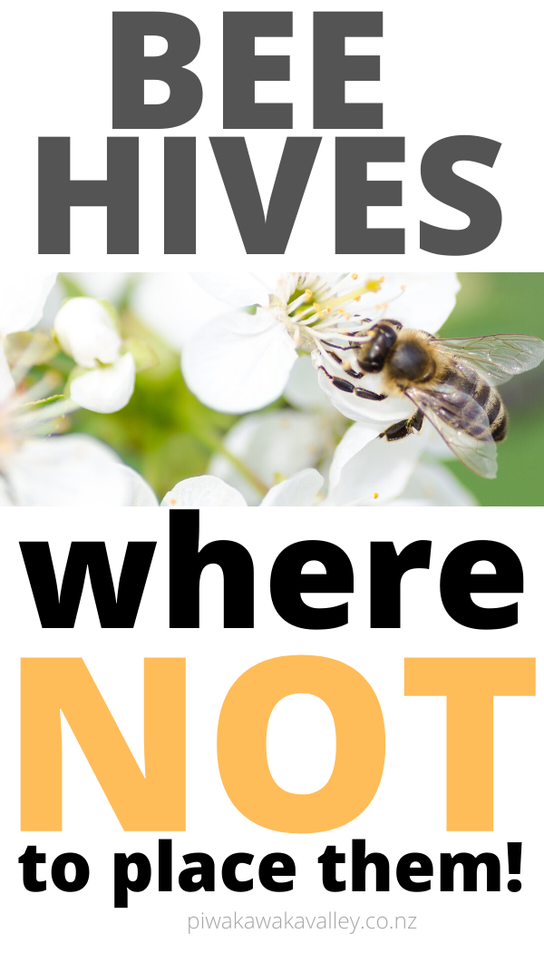 If you are wanting to keep bees you will need to make sure that your beehive is in the right place! Beekeepers learn the best way to position a hive to get the most amount of honey. Become a clever beekeeper today! #honeybee #homesteading #piwakawakavalley