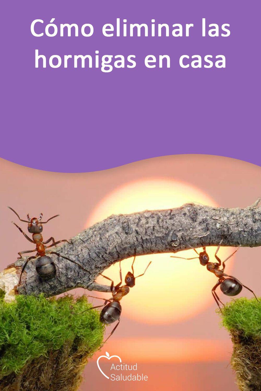 Como Acabar Con Las Hormigas Como Eliminar Las Hormigas En Casa En 2020 Con Imagenes