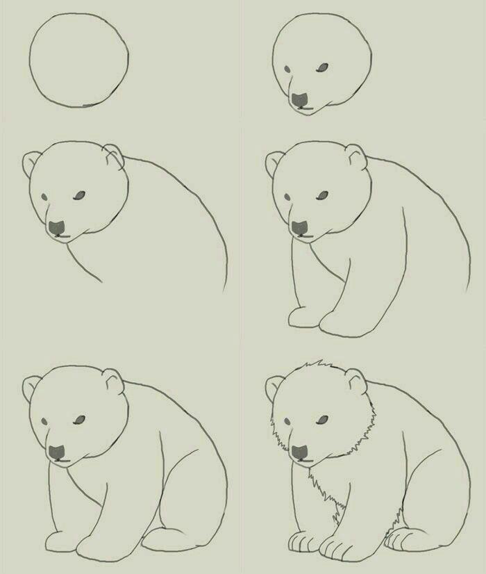Image Result For Animales En Peligro De Extincion Para Colorear Oso Polar Como Dibujar Un Oso Como Dibujar Animales Dibujos Faciles