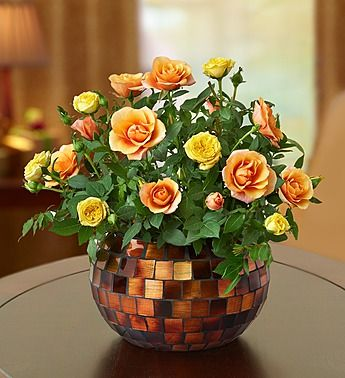Guide For Growing Miniature Roses Indoors Miniature Rose Care Planting Roses Indoor Flowers Indoor Roses