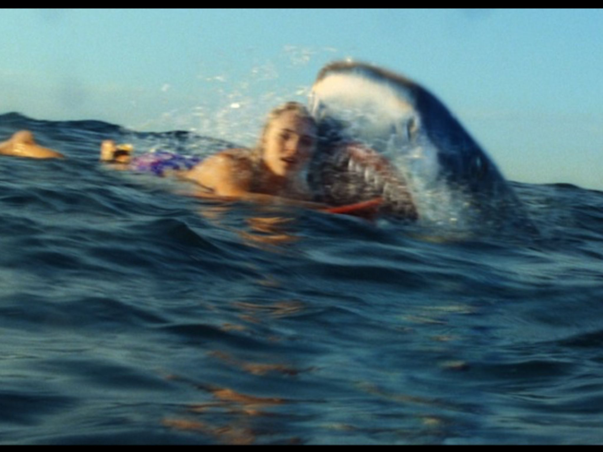 Shark Attack On Soul Surfer Soul Surfer Surfing Surfer