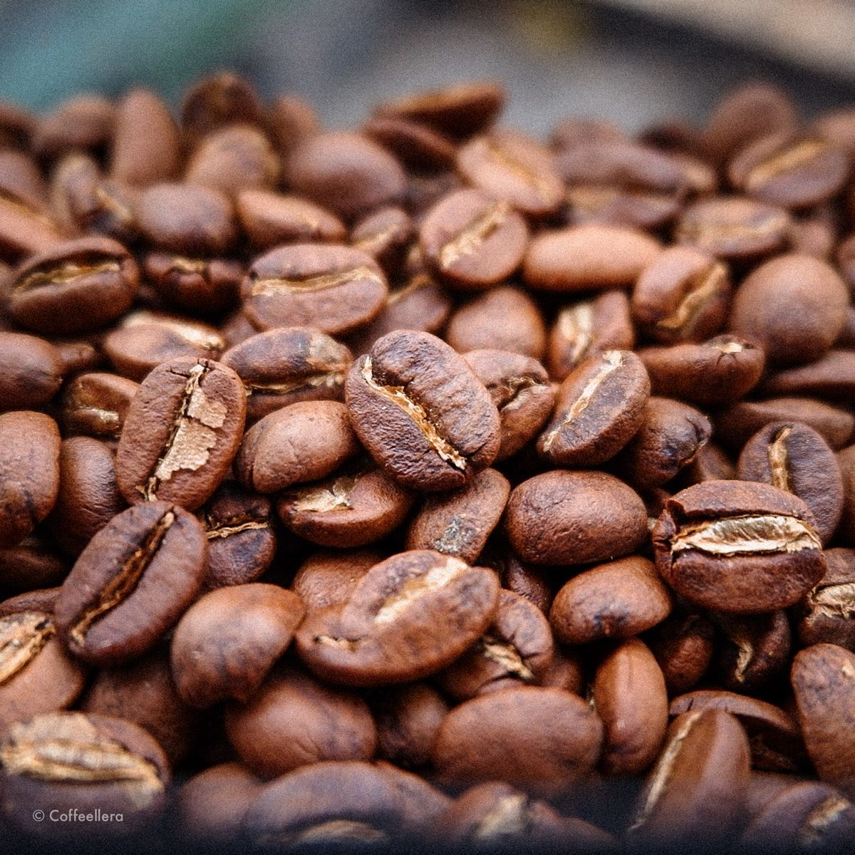 Philippine coffee beans in 2020 Coffee, Coffee beans