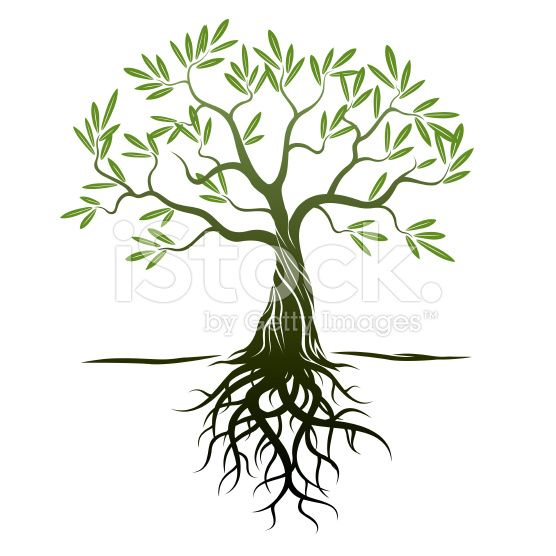 Tree And Roots Illustrations Vector Images Tree With Roots Drawing Roots Drawing Roots Illustration