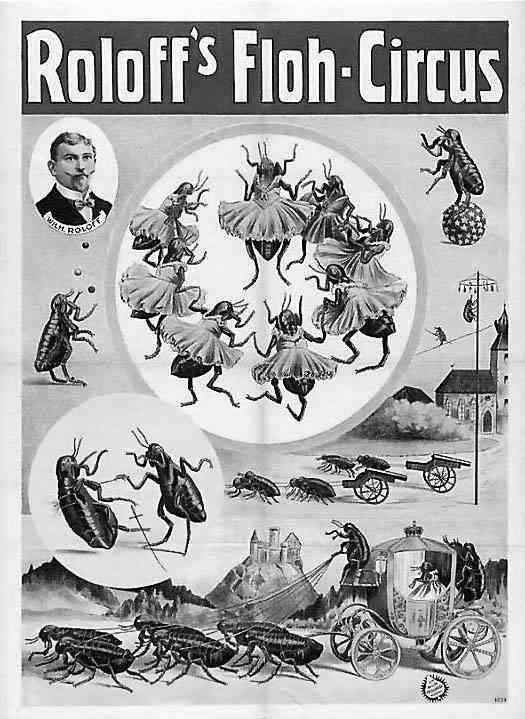 Cockroach act. Circus poster