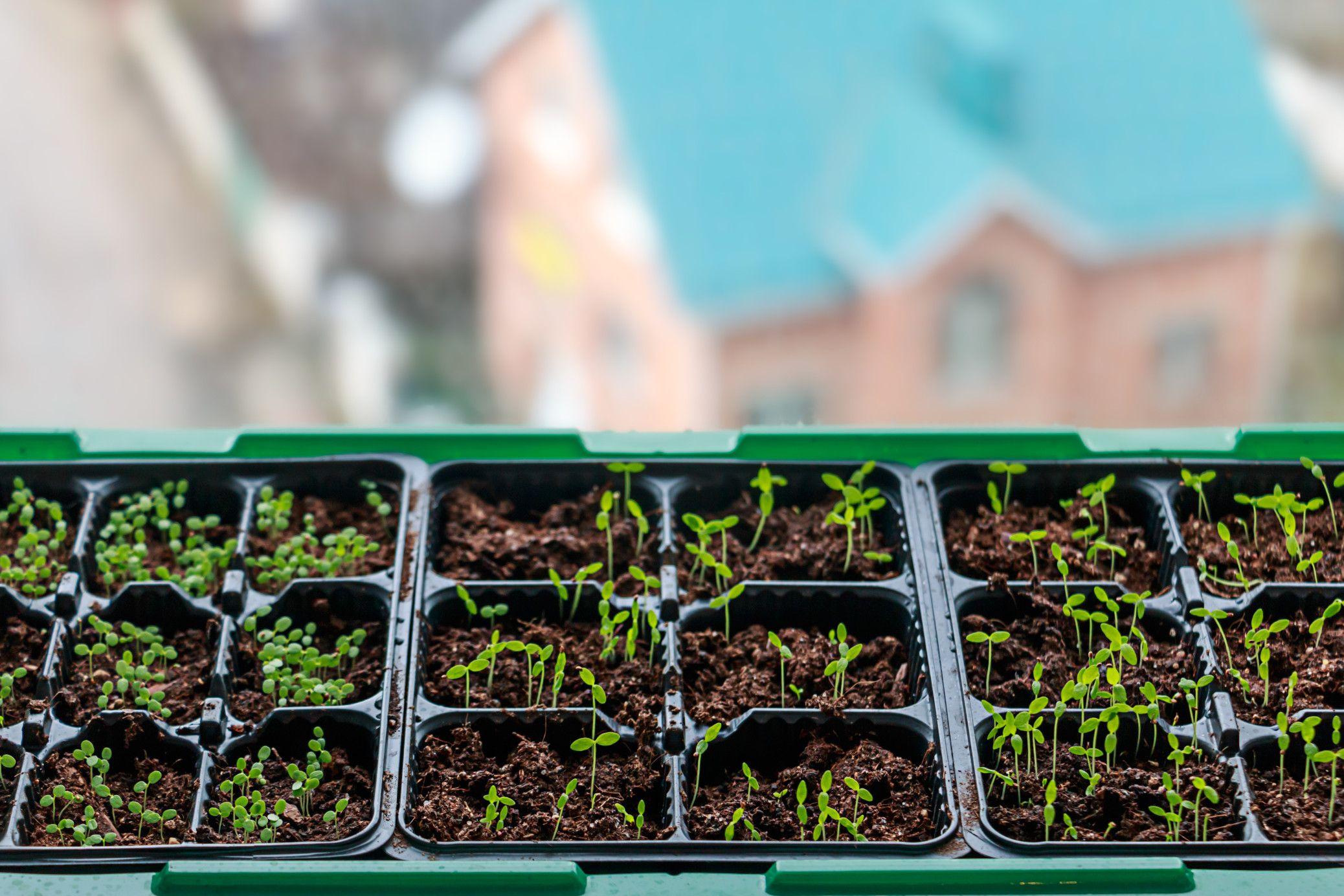 مصير البذرة أن ت زرع Plants