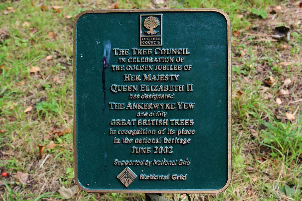 Ankerwycke Yew dedication at runnymede