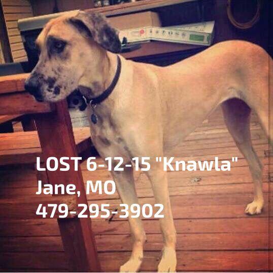 Lostdog 6 12 15 Knawla Jane Mo 479 295 3902 Https Www Facebook Com Missourilostfoundpaws Posts 387136478139579 0 Losing A Dog Find Pets