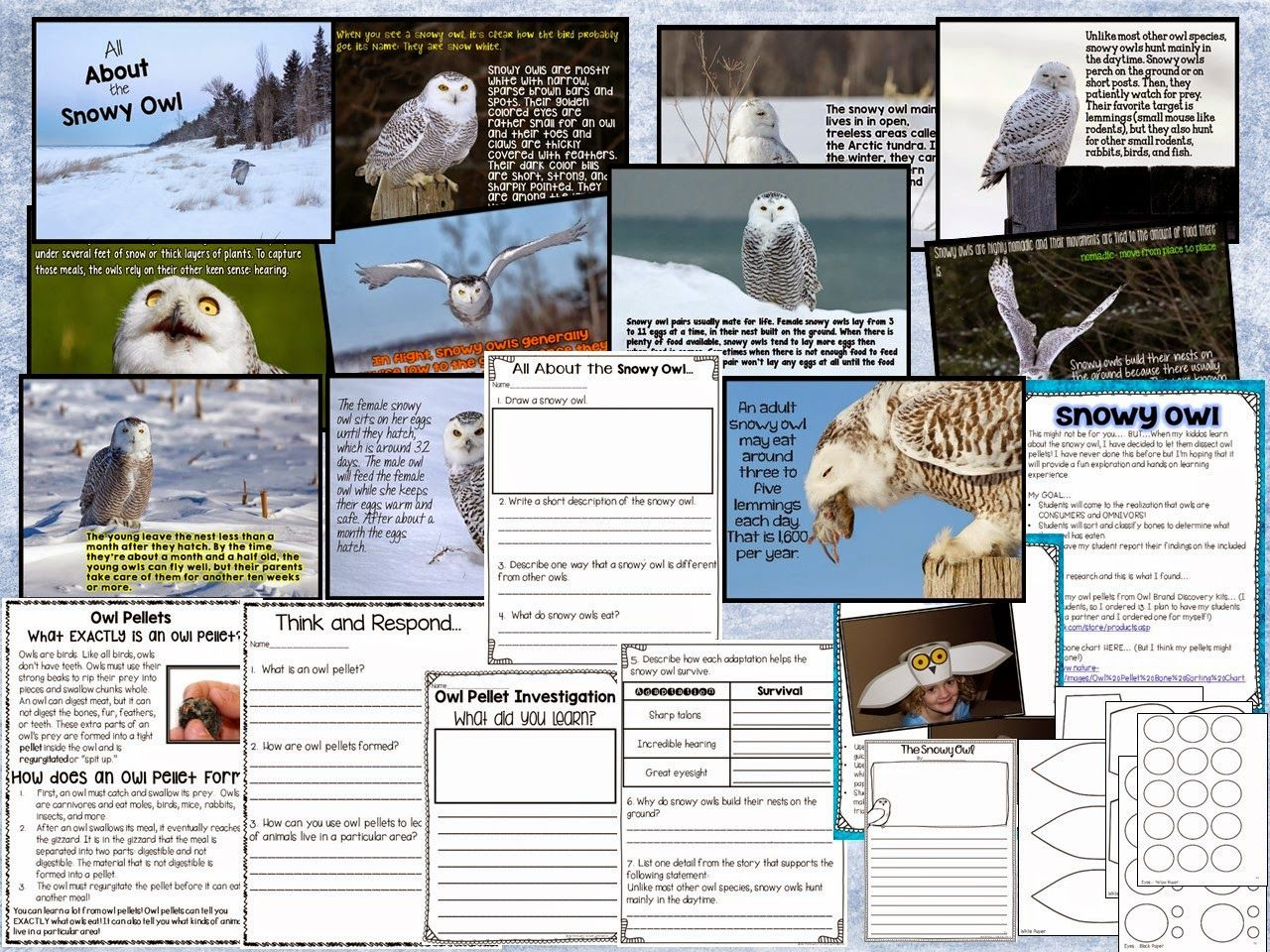 Snowy Owl Powerpoint Comprehension Questions Crafts