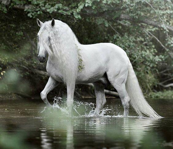 Gaiagalatea Quelle Scarlettjane22 Tumblr Com Pferde Weisse