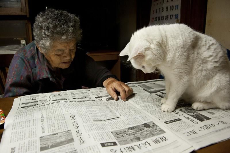 Misao the Big Mama and Fukumaru the Cat readers digest