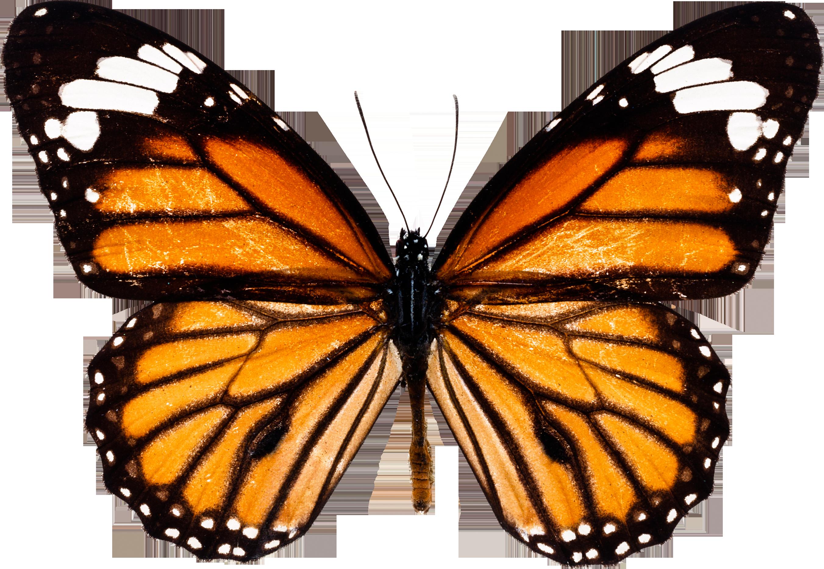 pin by karen prohinsie on butterflies pinterest butterfly
