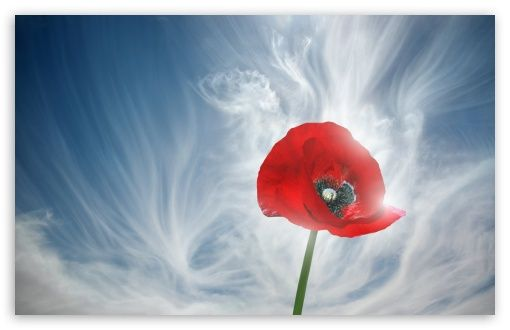 Download Poppy Against Blue Sky HD Wallpaper Poppy flower