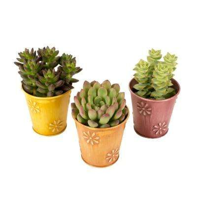 2 5 In Assorted Succulents In A Colored Daisy Tin 3 Pack 16 With Images Mood Board Aesthetic Vintage Color