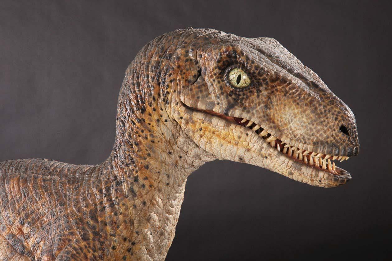 Jurassic Park Velociraptor Raptor   Raptor   Pinterest