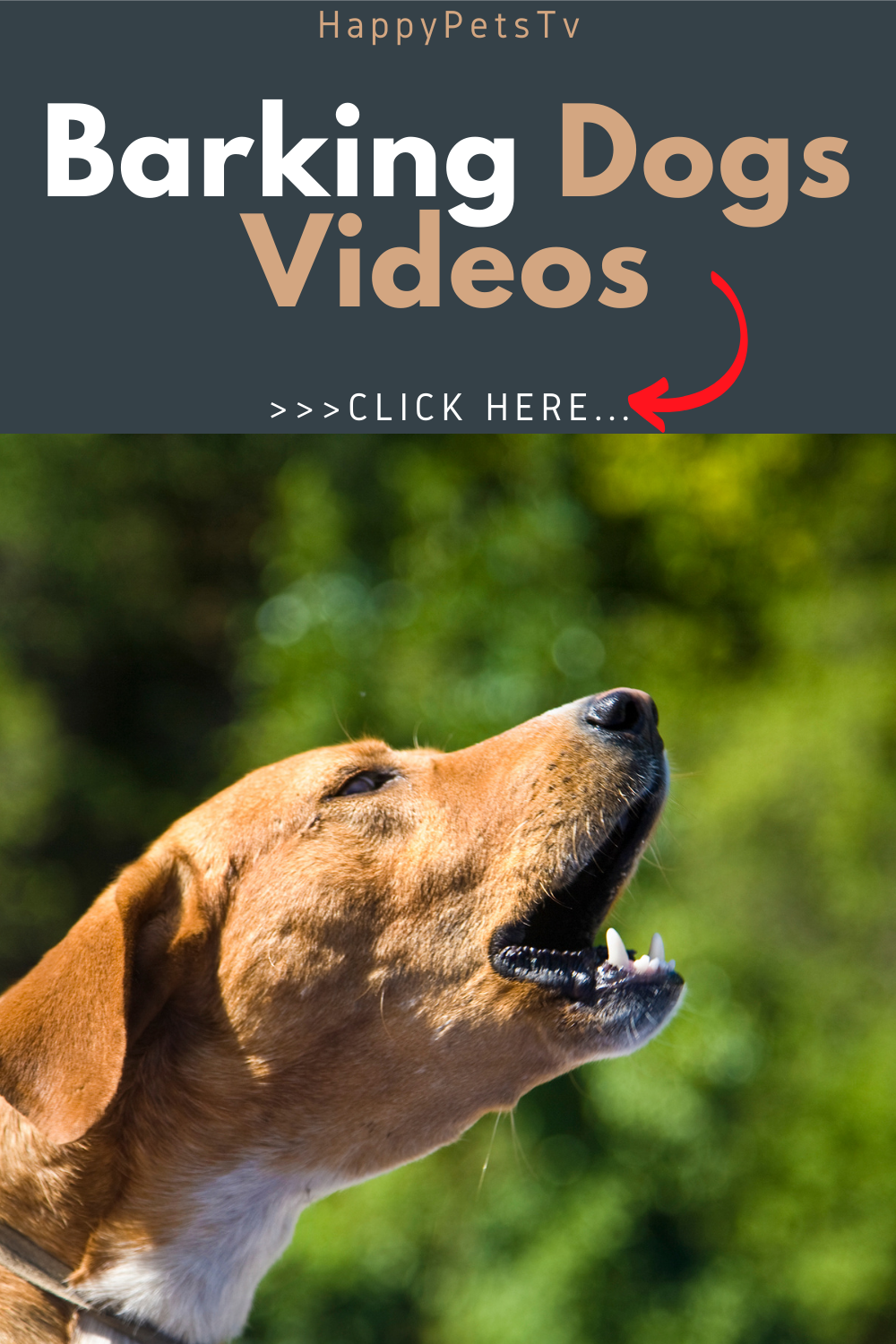 Amazing And Funny Dogs Barking Videos Dog Barking Dog Barking Video Funny Dogs