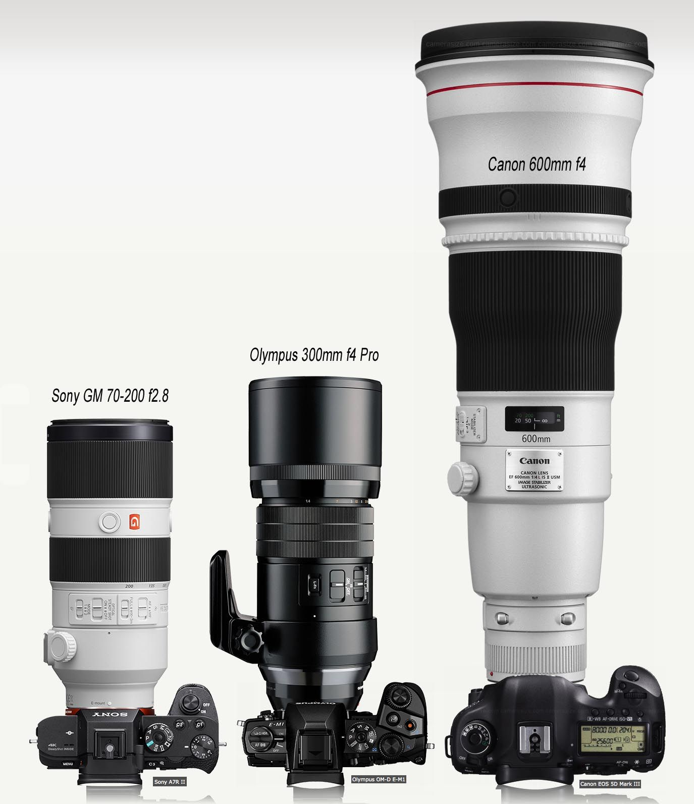 The Olympus 300mm Pro F 4 0 Official Lens Review By Craig Litten On Www Stevehuffphoto Com Vintage Cameras Photography Lens Cannon Camera