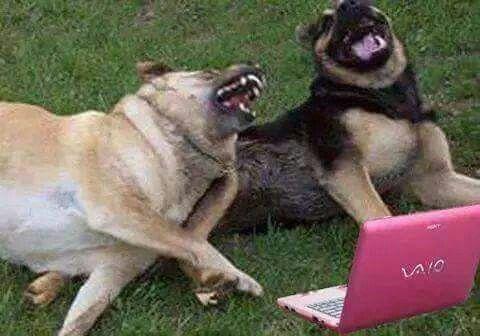 Pin De Maria Estrella En Memes Memes De Animales Divertidos Frases Divertidas Sobre Animales Fotos De Perros Graciosas