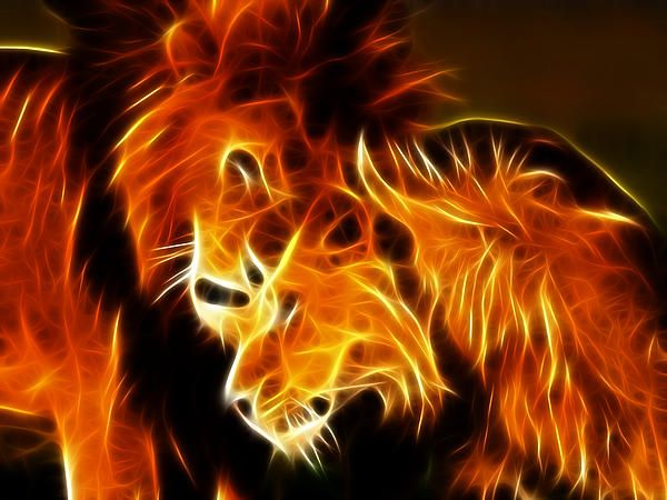 Lions In Love By Pamela Johnson Fractals Love Posters Lion Love