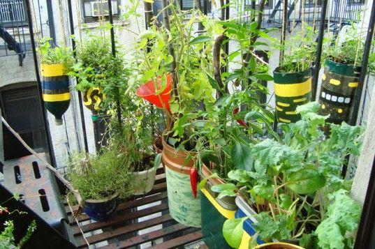 Urban Organic Gardener Grows A Lush Vegetable Garden On His Nyc Fire Escape