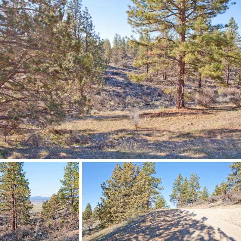 This 1.6 Acre Parcel Is Located Near The Small Town Of