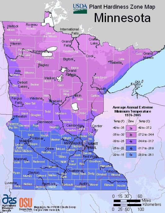 usda plant hardiness zone map for minnesota garden plantsvegetable