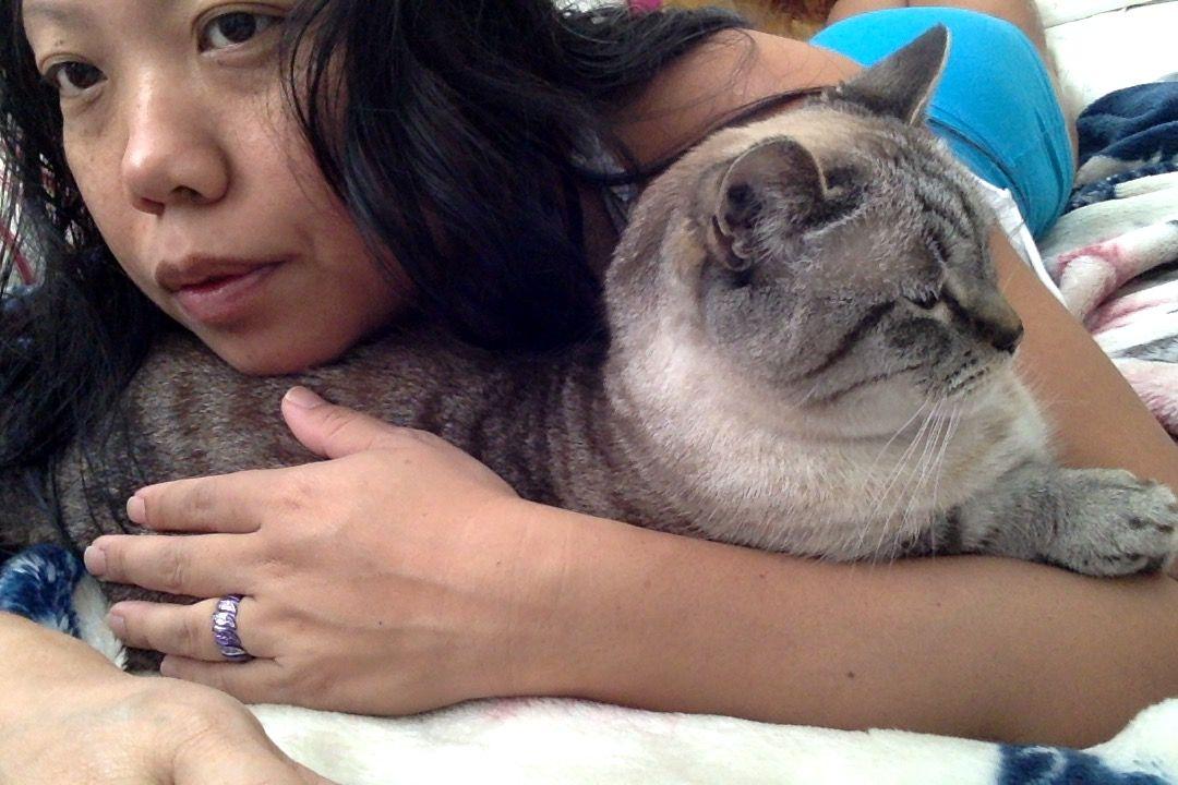 Cat Cuddles Cat cuddle, Cats, Cat purr