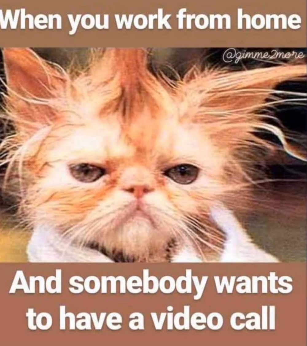 Dr Kashif Imran On Twitter Working From Home Meme Funny Work Humor