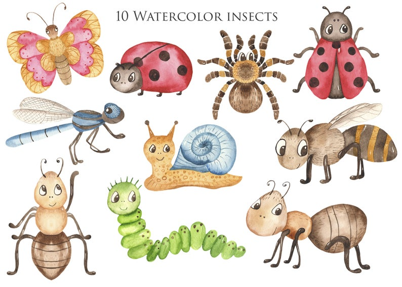 Watercolor Cute Insects Clipart Cartoon Illustrations Bug Etsy In 2021 Cartoon Illustration Insect Clipart Insects For Kids