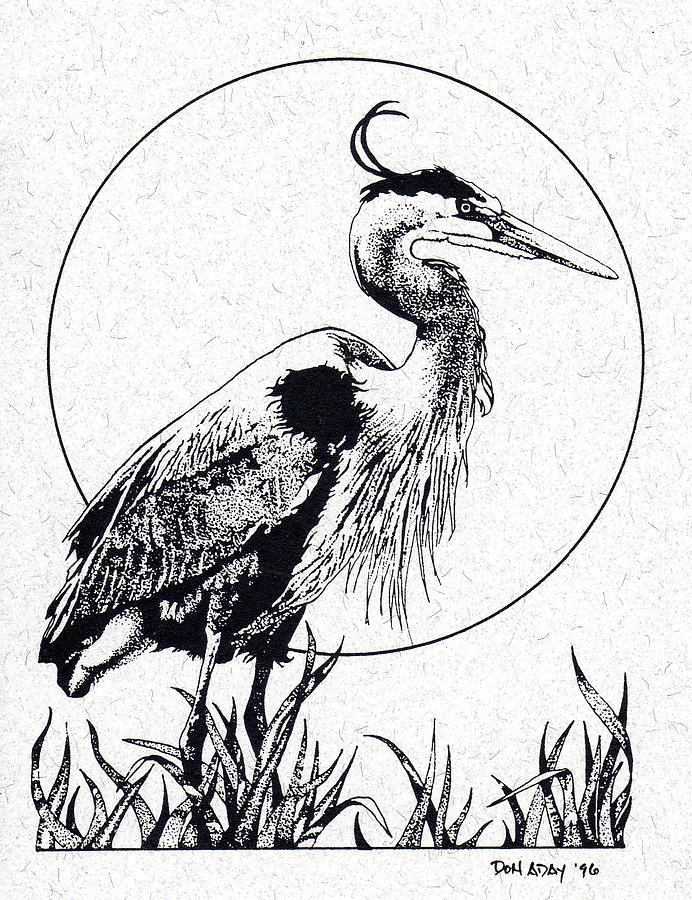 Great Blue Heron by Donald Aday