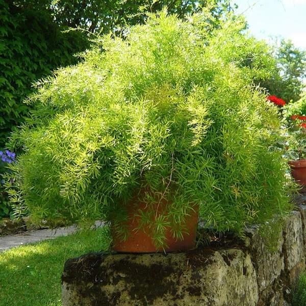 Te Rosliny Oczyszcza Powietrze W Twoim Domu Z Groznych Trucizn Zdrowepasje Pl Plants