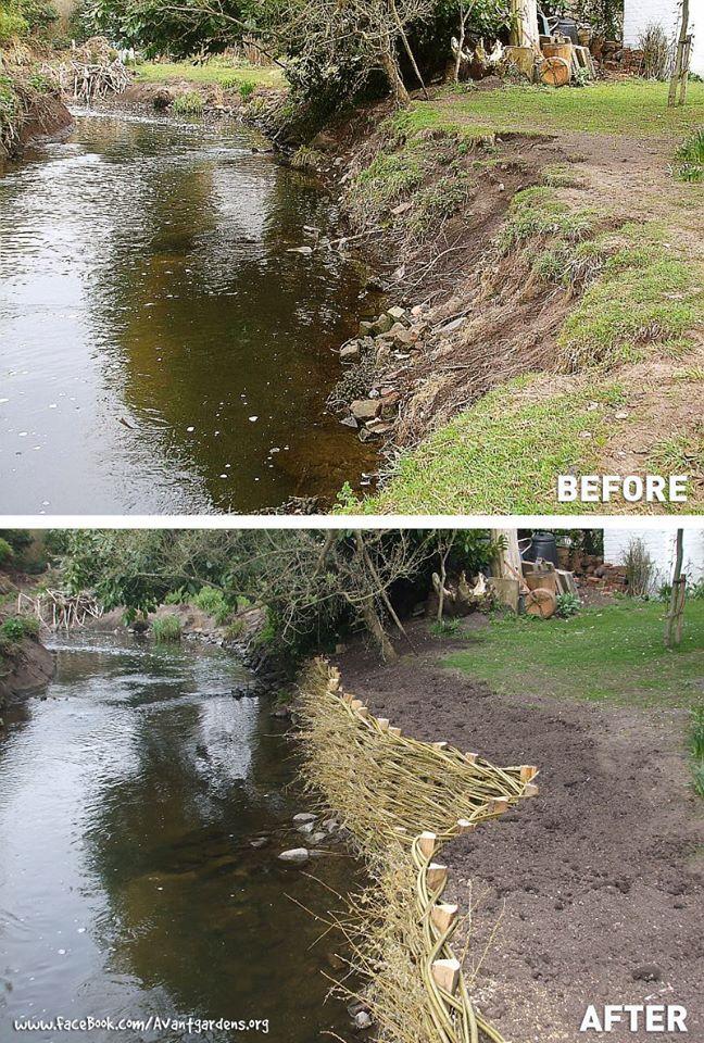 Using Living Willow Trees To Stem Erosion On River Banks Landscape Sloped Garden River Bank