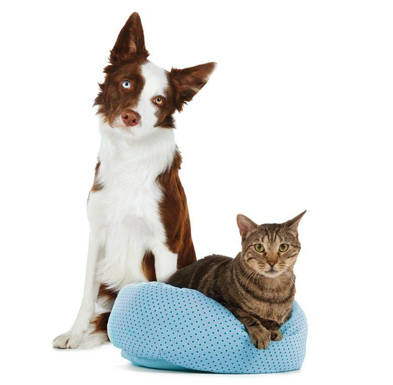 Best Friends By Sheri Deep Dish Cuddler Pet Bed Pets Pet Store Dog Cat