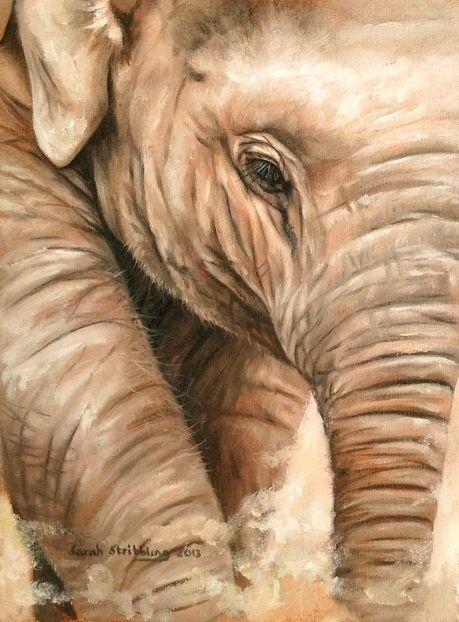 "8x6"" Asian elephant oil on canvas. Sarah's eBay page: http://www.ebay.co.uk/sch/i.html?_nkw=sarah+stribbling+&_trksid=p5197.c0.m627"