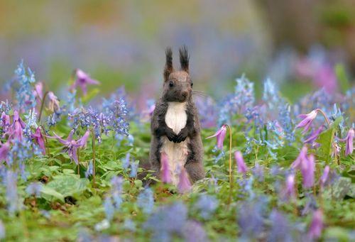 エゾリス 花園かける人気者 北海道 浦臼町 エゾリス リス 可愛い 動物