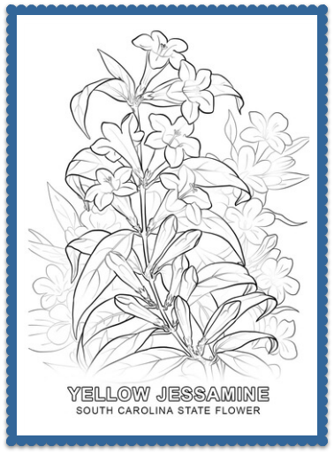 18+ North carolina state flower coloring page download HD