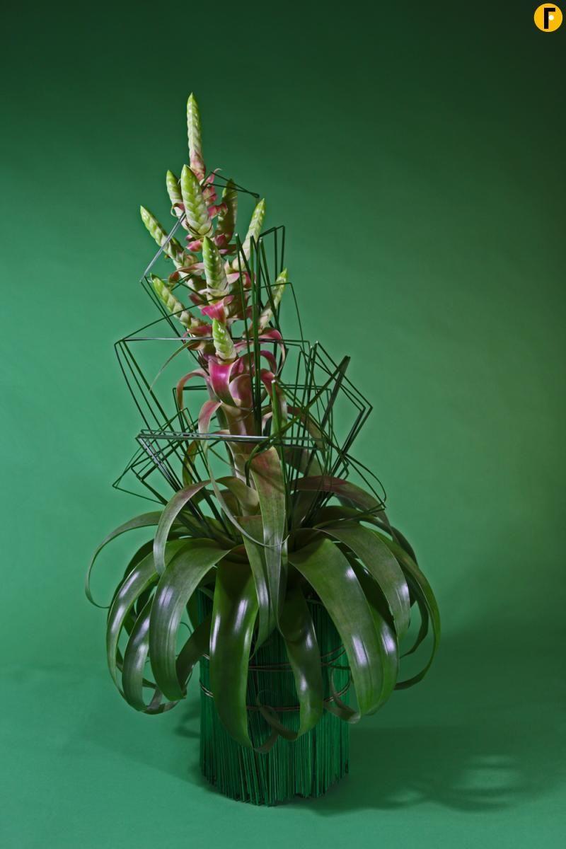 bromelia plantenarrangement