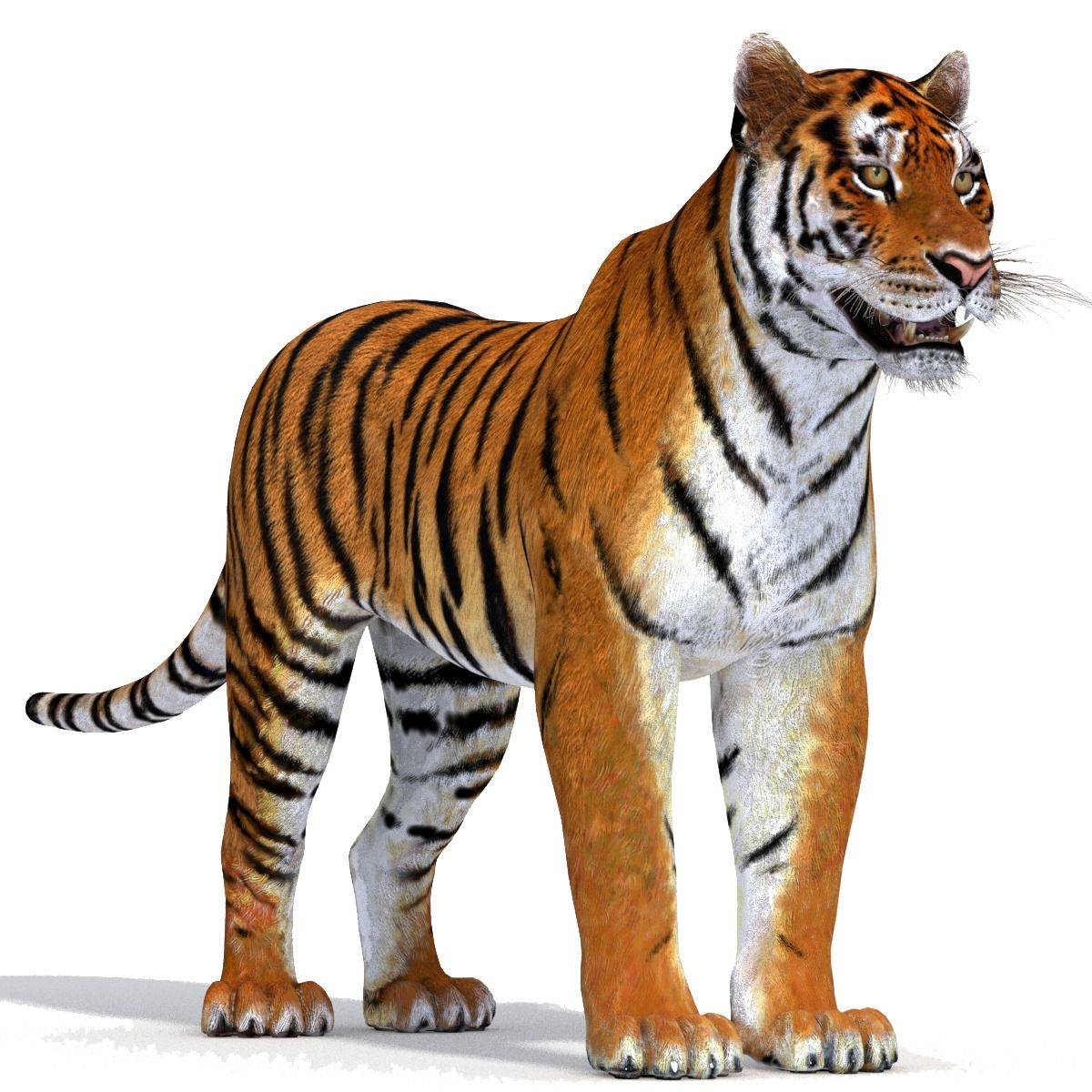 Realistic Tiger 3D Model Животные, Тигр