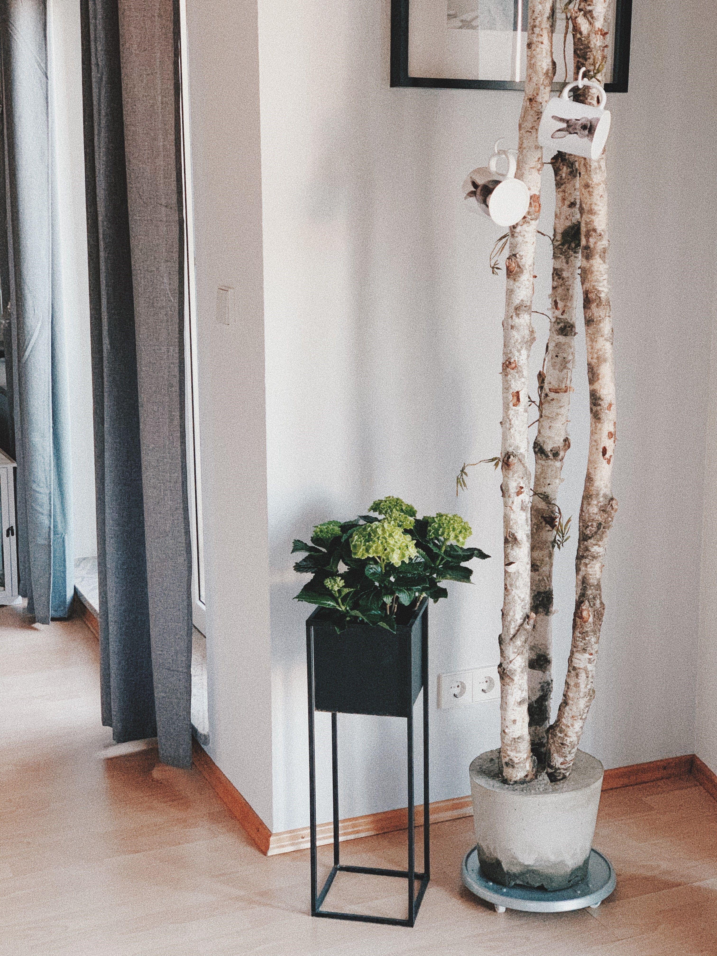 DIY Birken Deko in 6  Birken deko, Birkenholz deko, Esszimmer