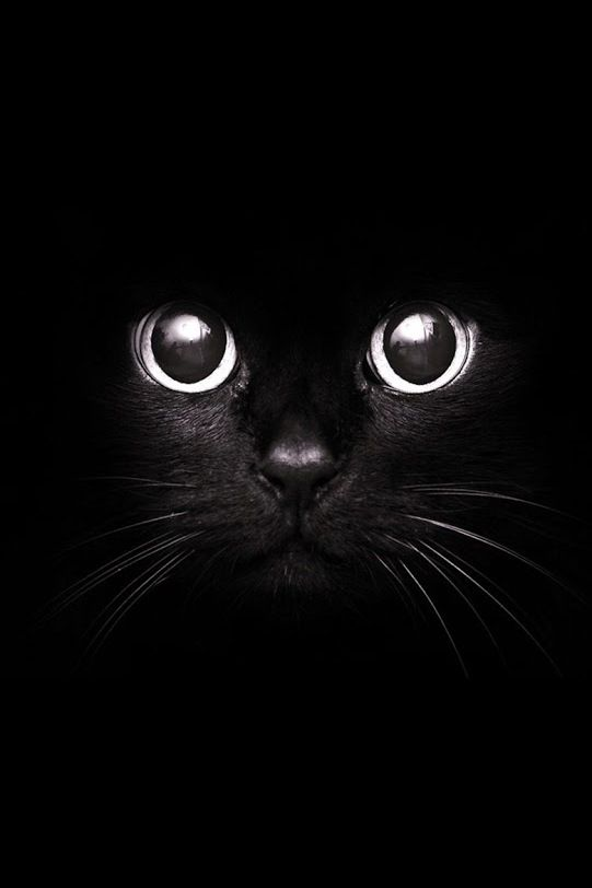 Black Cat Inspiration Picture For When Your Art Paper Arrives