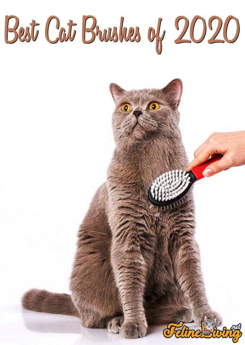 in 2020 Cat brushing, Cool cats, Cat