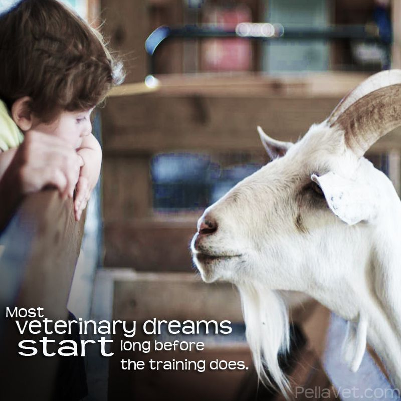 Wake up 2013 Vet Med Graduates, the dream is ended this