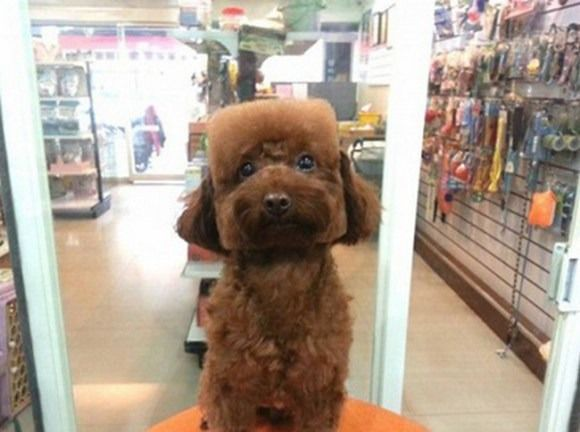 Square Faced Dogs Are Now A Thing In Taiwan Pet Groomers Dog Grooming Pet Grooming
